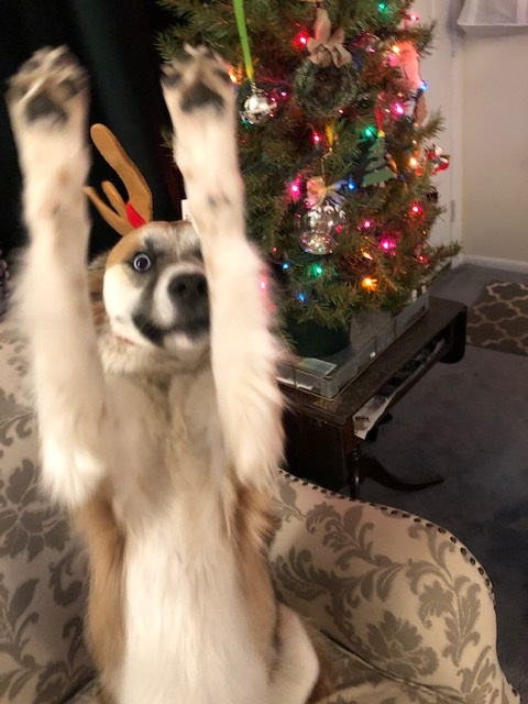 Raise your hands if you love Christmas!